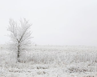 Winter Trees Photography, Winter Landscape, Frost Art, White Home Decor, Nature Photograph, Black and white photograph - Winter calm