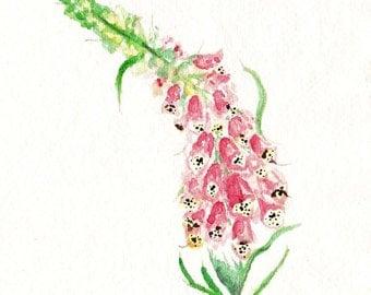 Original Foxglove Watercolour Painting