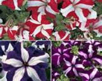 Petunias- Star Mix- 100 seeds each pack
