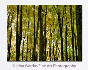 Large canvas art, tree canvas, forest canvas picture, woodland art, nature canvas wrap, brown yellow green forest wall art, family room art