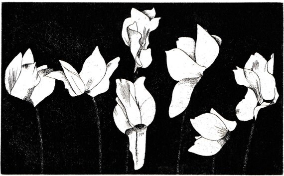 Vintage print of etching by Beth Van Hoesen, row of Cyclamen flower heads on stems, black on cream paper, 8 x 9.5 inches, 1972
