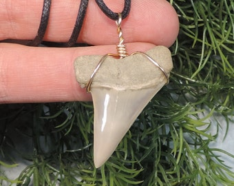 1 9/16'' Mako Sharks Tooth Necklace. AURORA N.C. Beautiful!!