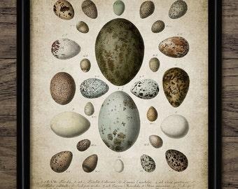 Bird Egg Print - Bird Egg Decor - Bird Watcher - Egg Chart - Bird Lover - Digital Art - Printable Art - Single Print #100 - INSTANT DOWNLOAD