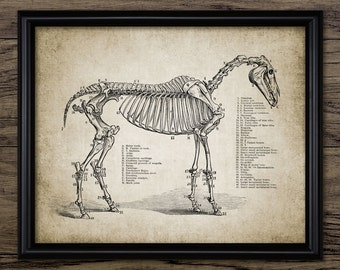 Vintage Horse Skeleton Print - Horse Anatomy Illustration - Horse Anatomy Wall Art - Printable Art - Single Print #691 - INSTANT DOWNLOAD