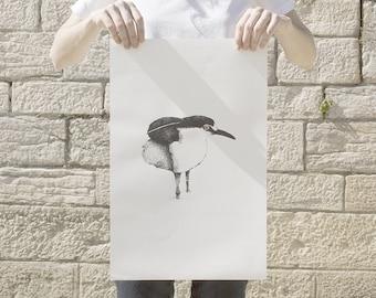 POSTER BIRD (Black-crowned Night-Heron)