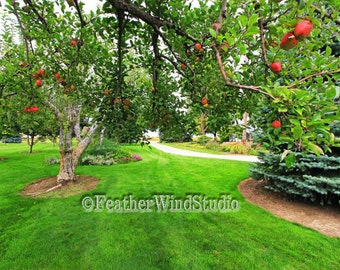 Apple Orchard Country Landscape Photography   Red Apples Fruit Trees Pic   Michigan Farm Art   Green Grass Home Decor   Manicured Lawn Print