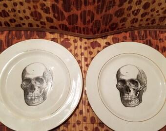 Vintage Anatomical Skull Drawing plates set of 2
