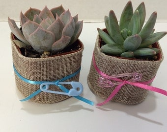 Succulent Plants. Assortment of 50 Baby Shower Favor Succulents with Burlap, Ribbon and Diaper Pin