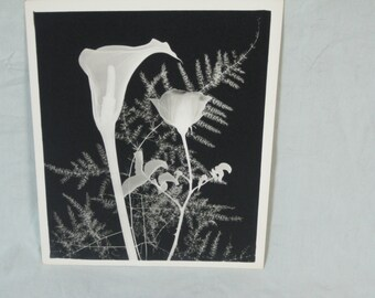 x-ray flower picture