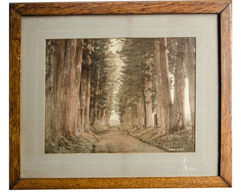 1880's albumen photograph with color added of Nikko cedars near Imaichi Japan