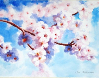 Almond blossom in the Spanish Spring