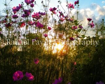 Flowers at Dusk - Original Photograph