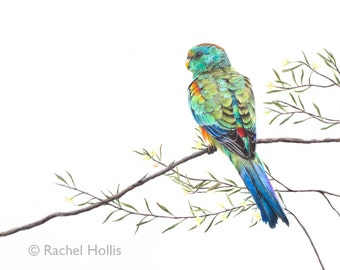 "5x7"" Mulga Parrot, Australian Bird Art, Parrot Print, Wall Decor"