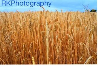 Barley Day in July