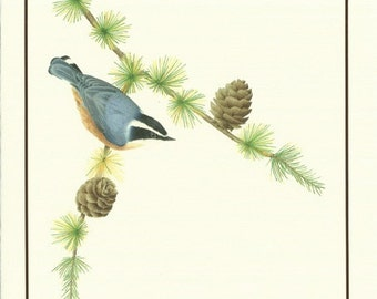Set of 4 Nuthatch Cards