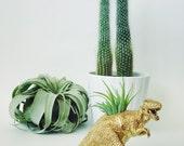 Small Gold T-Rex Dinosaur Planter with Air Plant; Dinosaur Planter; Dino; Tyrannosaurus Rex; Air Plant; Tillandsia; Dino Planter; Gift Idea