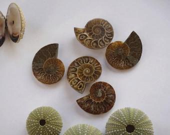 FreeShipping Ammonite Morocco cut by half