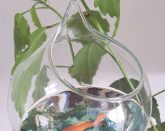 Hanging Glass Ball Goldfish in a Bowl
