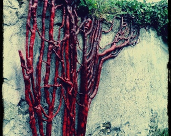 Ivy, ivy sculpture sculpture, wood carving, wood carving, wall sculpture, wall sculpture, sculpture roots, plant design, green