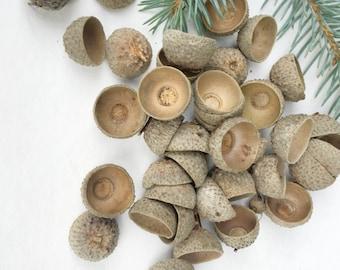 50 acorn caps Natural Acorn Cap crafts  Real Acorn Tops Acorn caps for sale Acorn caps bulk Acorn caps to buy dried acorn caps oak acorn cup
