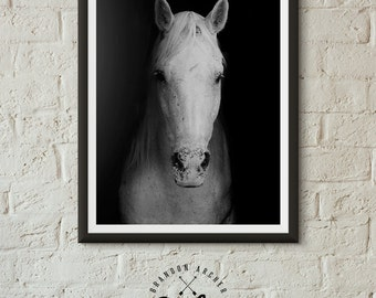 white horse horse print bw photography horse photo wall art horse colorado horse wilderness print equestrian art
