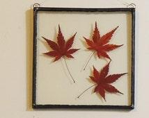 Leadlight Botanical - Japanese Maple