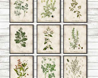 Kitchen Herbs, Kitchen Wall Art, Print Set of 9, Vintage Botanical Herb Prints, Herb Kitchen Decor, Herbs Illustrations, Botanical Decor