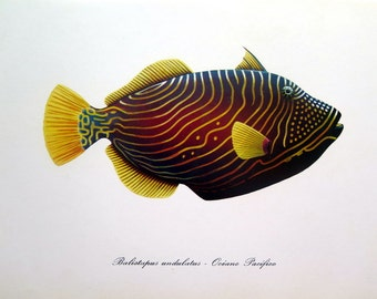 Antique FISH print, vintage Orange triggerfish lithograph, 1975 curious FISHES color lithograph, sea life marine animal color engraving
