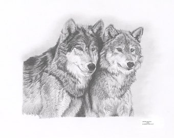 WOLVES Limited Edition art drawing print signed by UK artist
