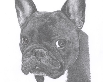 FRENCH BULLDOG dog Limited Edition art drawing print signed by UK artist