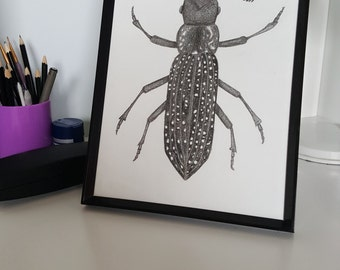 A4 Hand Drawn Feather Horned Beetle Print, Scientific Illustration, Entomology
