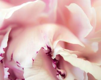 Modern Peony, Abstract Photograph, Modern Art, Contemporary Art, Floral, Flower, Modern Floral, Pink