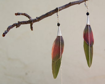 Macaw and Senegal Parrot Feather Earrings