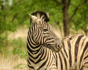 Stripes of Africa