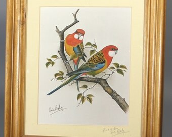 Watercolour Parakeets Print Eastern Parakeets Rosella Eric Peake Framed