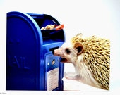 Hedgehog and Mailbox Postcard, set of 2, Codex loves mail postcards