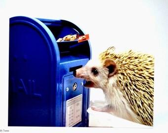 Hedgehog and Mailbox Postcard, set of 2, Codex loves mail postcards