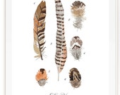 Feather Patterns Vol.5 - Scientific illustration. Beautifully textured cotton canvas art print. Order as a 5x7 8x10 11x14 or 16x20 size.