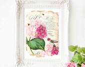 Hummingbird, pink hydrangea botanical French art print, vintage decor, A4 giclee