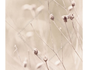 White Botanical Wrapped Canvas Photo Print, Delicate Dried Plants in Soft Background