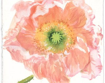 Watercolor flower painting -Peach Poppy- original watercolor flower painting