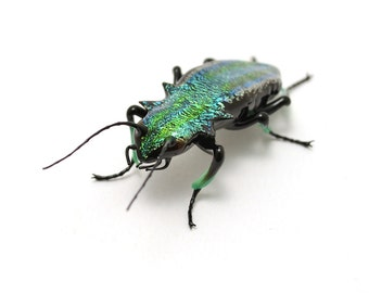 Citrine Green Jewel Beetle - realistic dichroic lampwork glass insect beetle figurine glass artist Wesley Fleming