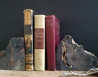 Petrified Wood Bookends Natural History Fossil Library Decor