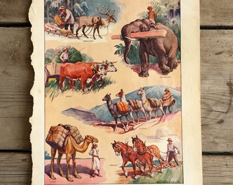 Vintage Working Animals Print. 1941 Merriam Webster Dictionary Page.   Print for Framing. Antique Print of Animals Working Wall Hanging.