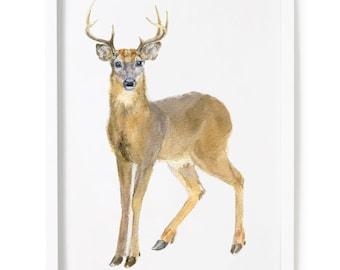 Deer watercolor print, Stag print, Deer wall decor