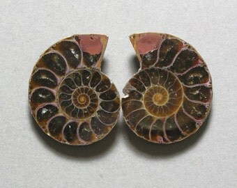 fossil AMMONITE cabochons matching pair two 24X30mm designer cabs
