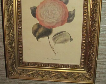 REDUCED FREE SHIPPING Antique Fancy Gold Gesso Framed Camellia Botanical Flower Print Ornate Victorian Designs Period Picture Frame
