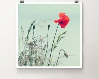 Dripping Poppy - Fine Art Print of Poppy Flower by the Seaside with a vintage Feel