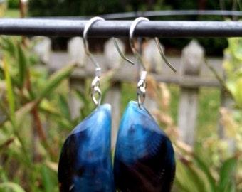 Black and Blue Shell Earrings