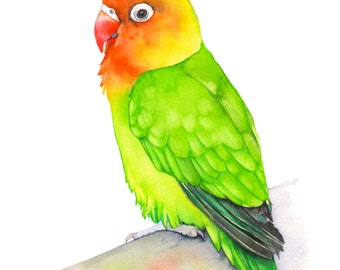 Lovebird print of watercolor painting, 5 by 7 size, LB11016, Lovebird watercolor painting, Lovebird painting, tropical wall art